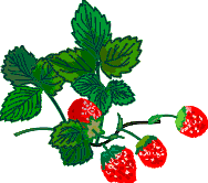 Wild strawberries for your enjoyment as you hang by one hand over the bottomless cliff edge of Ultimate Reality.
